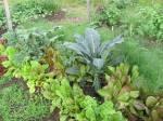 legumes-feuilles-varies-2014